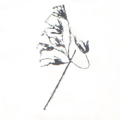 Monoprints with water-based inks