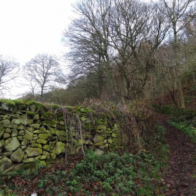 Stone wall and hedge boundary